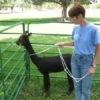 Zephyr  Halter Training and Catch Rope