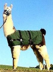 Llama or Alpaca Insulated Coat