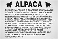 Alpaca Information Sign - Huacaya or Suri