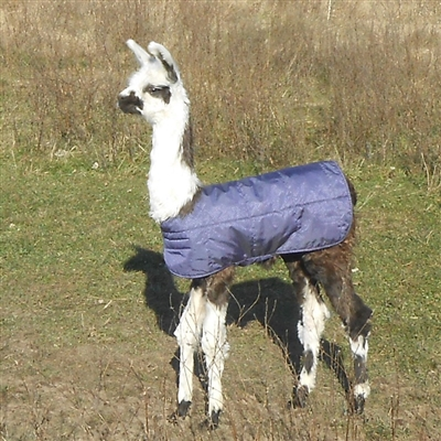 Cria Coats for Llamas & Alpacas