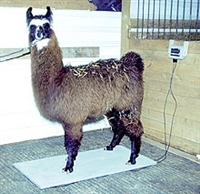 PS1000 Camelid Scale (Llama or Alpaca)-FREE SHIPPING - ON SALE NOW-SAVE $100 UNTIL JANUARY 30TH 2019!