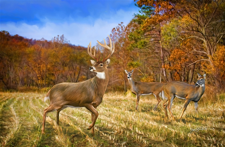 Deer in Autumn Light by Lois Stanfield