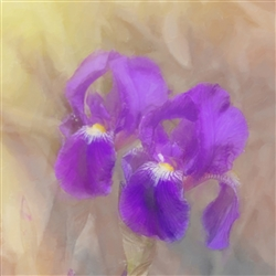 Painted Iris by Hal Halli