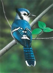 Blue Jay - Clarence Stewart