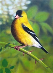 Gold Finch - Clarence Stewart