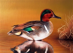 Green Wing Teal - Clarence Stewart