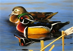 Wood Ducks in Cattails - Clarence Stewart
