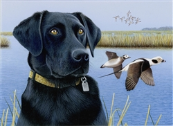 Ready and Waiting Black Lab  - Clarence Stewart