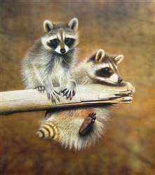 Annual Competition Raccoons - Clarence Stewart