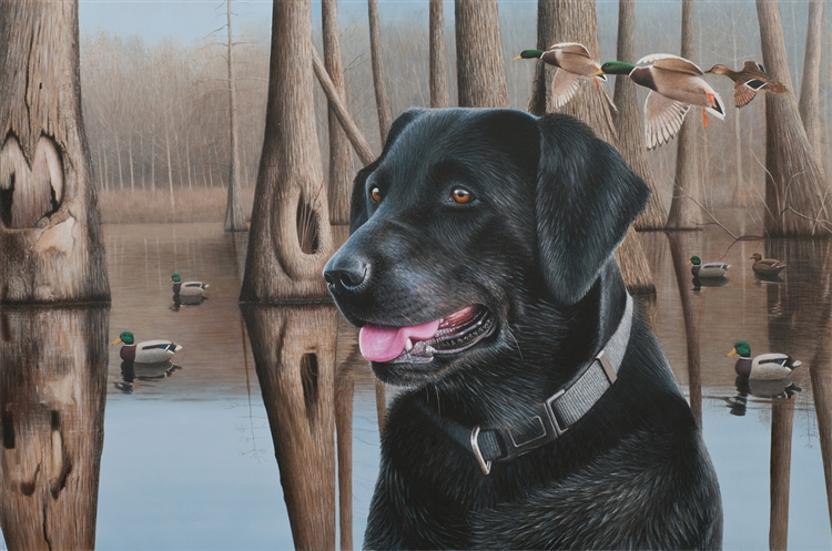Black Lab and Mallards - Clarence Stewart