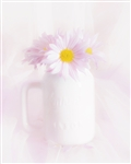 Daisies in White Vase by Hal Halli