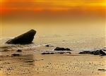 Rocks on the Golden Sea by Hal Halli