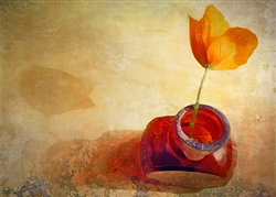 Orange Poppy in Brown Bottle by Hal Halli