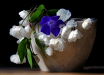 Purple & White in a Pot by Hal Halli