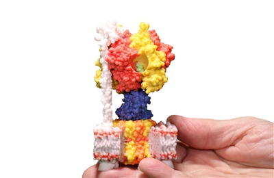 ATP Synthase Mini Model