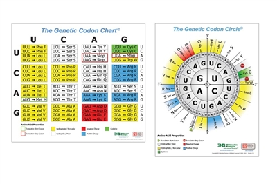 3DMD Genetic Codon Posters<sup>&#169;</sup>