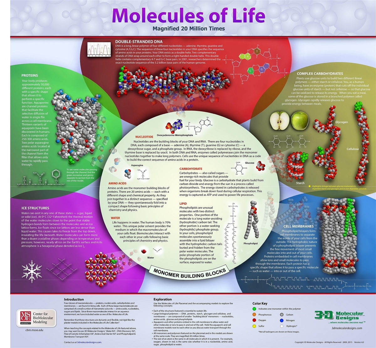 worksheet Molecules Of Life Worksheet molecules of life collection life