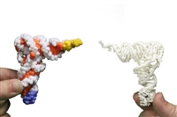 Transfer RNA Mini Models