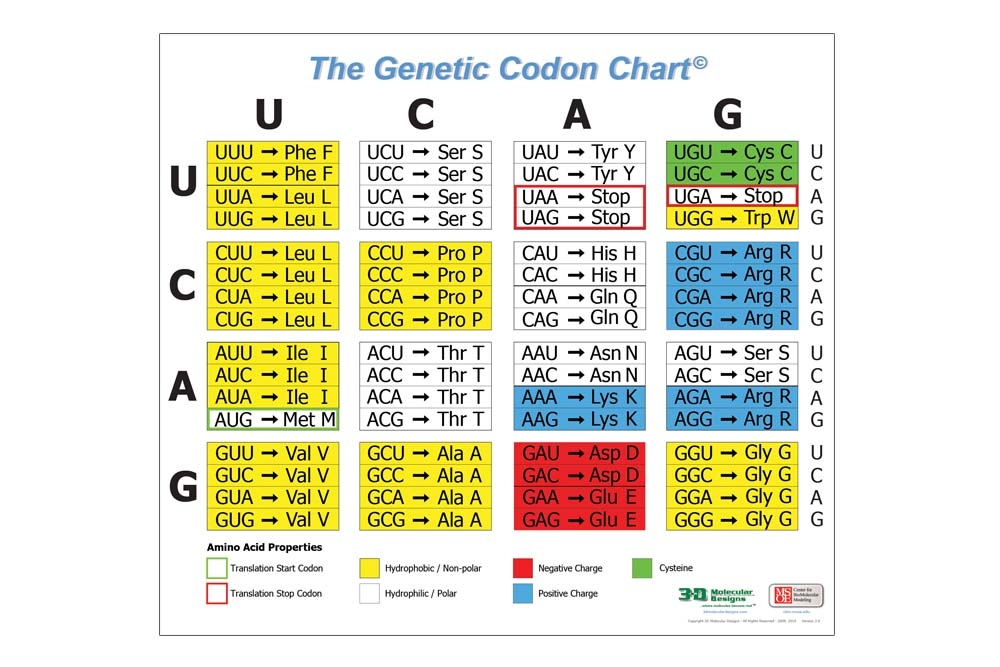 Genetic Codon Posters