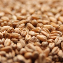 Brown Malt 1 lb