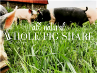 Whole Pig Share