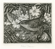 Robin Tanner signed original etching Wren and Primroses