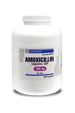 Can Dogs Take Human Amoxicillin