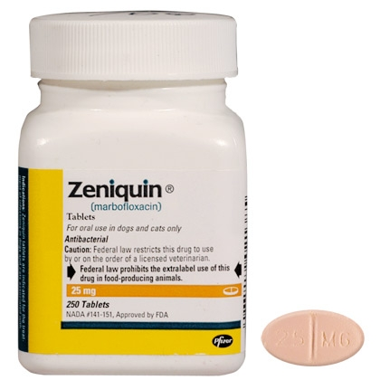 Zeniquin For Dogs Ear Infection
