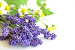 4oz. bottle of Chamomile and Lavender fragrance oil for candles. Synthetic Carrier. 1/2oz-1oz. per pound of wax.