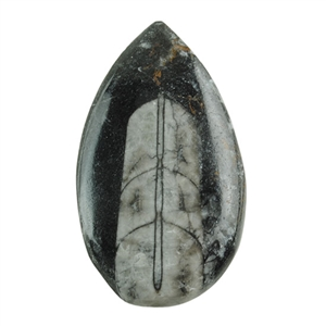 Orthoceras Gemstone - Pear 31mm x 53mm Pkg - 1