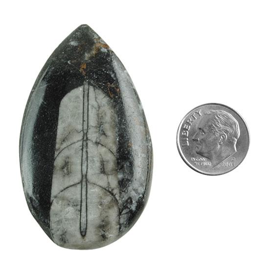 3 Pcs Natural Orthoceras Fossil Gemstone I Genuine Orthoceras Cabochon Gemstone I 43x16mm Crystal Therapy Gemstone I Orthoceras Pendant