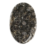 Turritella Agate Gemstone - Defective Stone - Freeform Pendant 31mm x 48mm