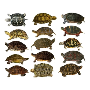 Enamel, Ceramic & Glass Decals - Colorful Land Turtles