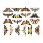Enamel, Ceramic & Glass Decals - Colorful Moths #1