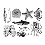 Enamel, Ceramic & Glass Decals - Mixed Sea Life