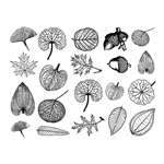 Enamel, Ceramic & Glass Decals - Small Leaves