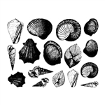 Enamel, Ceramic & Glass Decals - Seashell