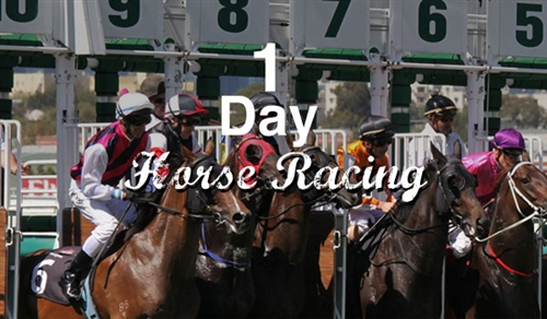1 Day Horse Racing Trial