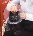 Feline Care and First Aid - Diploma