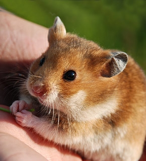 Small Mammal Care - Diploma