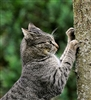 Advanced Feline Behaviour Diploma - CPD