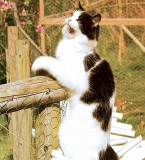 Advanced Diploma in Feline Behaviour Management - Diploma