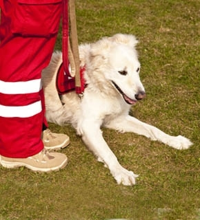 Search and Rescue Dog Handler Canine Studies Diploma