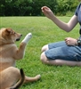 Foundations of Canine Behaviour Management - Diploma