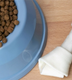 Canine Nutrition for Veterinary Nurses