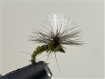 BWO SPOTLIGHT EMERGER