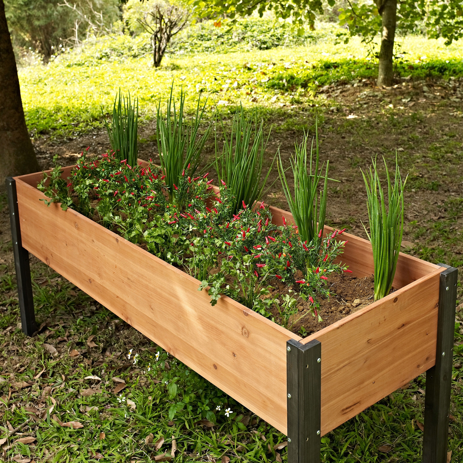 Gardening Beds: Elevated Outdoor Raised Garden Bed Planter Box