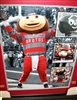 Brutus Buckeye Evolution 16 x 20 Framed