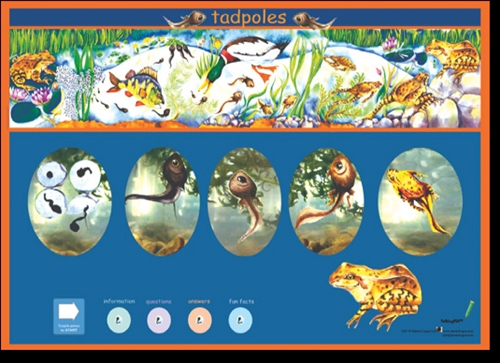 Tadpoles Poster-Multilingual Edition, Multicultural Poster