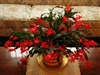 CHRISTMAS CACTUS RED-Schlumbergera bridgessii Tropical Zone 9+